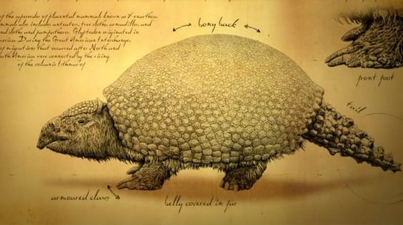 Glyptodos and Glyptodonts*