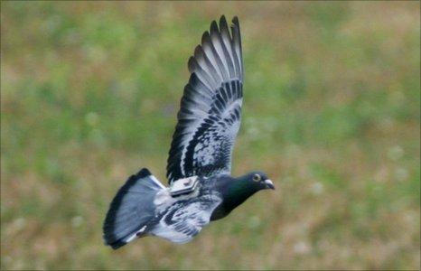 Pigeons and Goldfish or Taxonomic Rebate