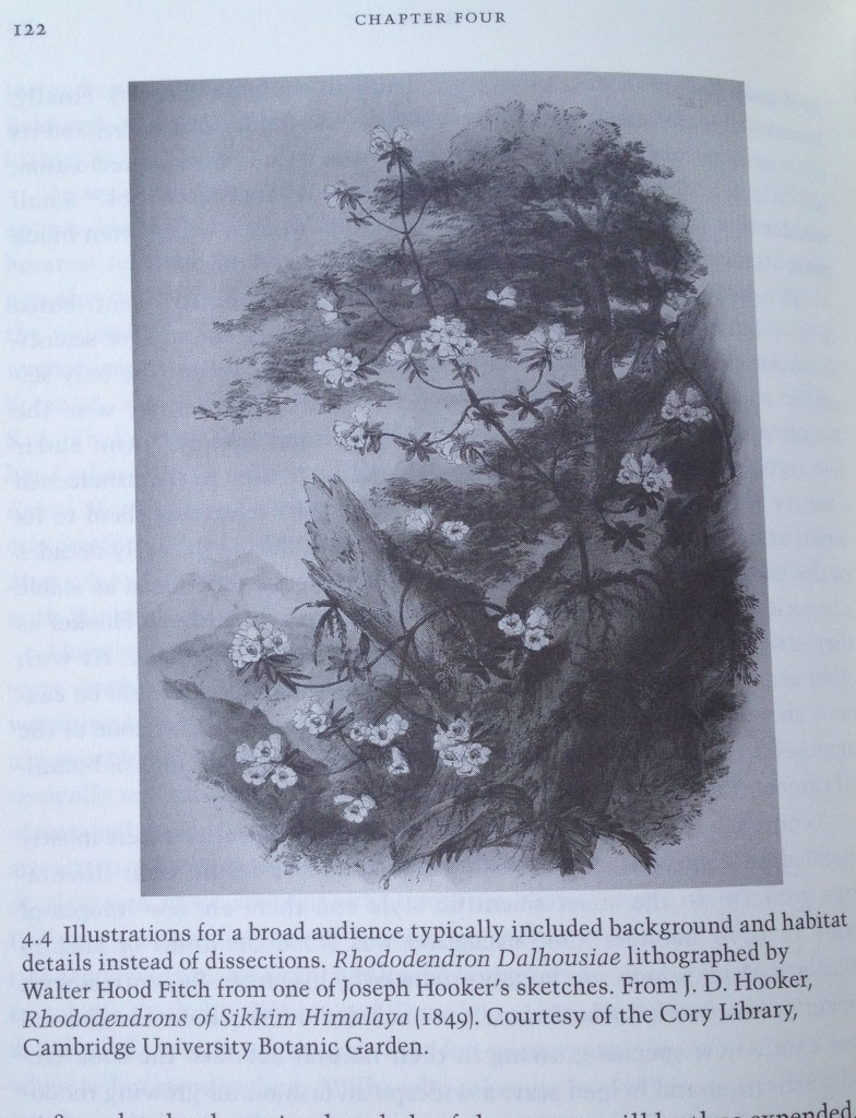 One of the few botanical illustrations to contain location background information (more than a blank white page)