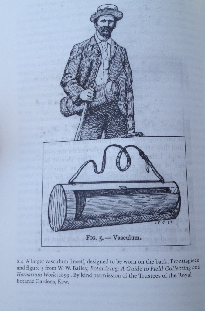 A larger vasculum for more rigorous field collecting.